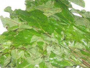 Oha Leaf